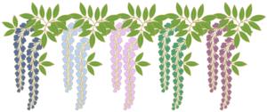 藤の花 青緑紫