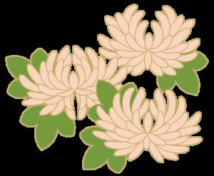 kiku04d