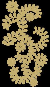 小菊と唐草